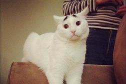 sam-gatto-sopracciglia