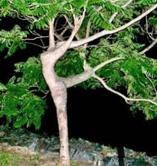 La danzatrice... vegetale!