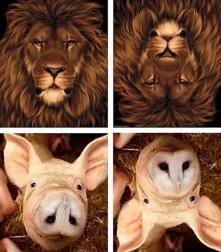 E ora l'angolo Superquark: lo sapevate che un Leone capovolto diventa un coniglio ed un maiale capovolto si trasforma in Civetta?
