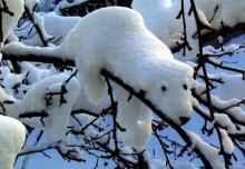 E adesso non venitemi a dire che gli orsi polari dormono sugli alberi, eh?!?