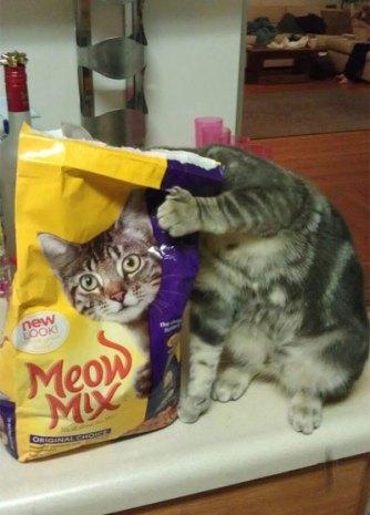 Gattino curioso!